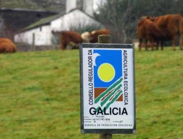 Alimentos ecolóxicos: ¿Que mercan e como son os consumidores galegos?