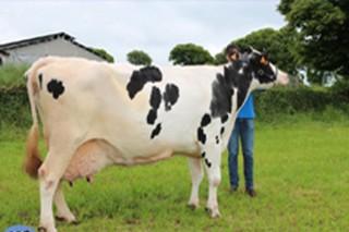 ¿Cales foron as mellores vacas e as mellores ganderías de Galicia en 2017?
