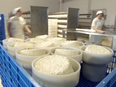 Influencia da selección xenética en Frisona nos rendementos do leite en queixería