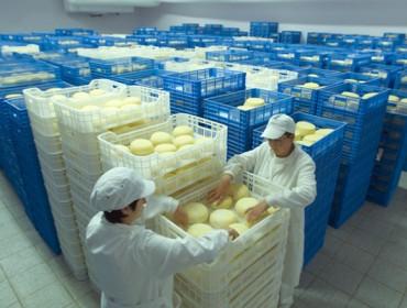 La crisis del sector lácteo también perjudica a las queserías españolas
