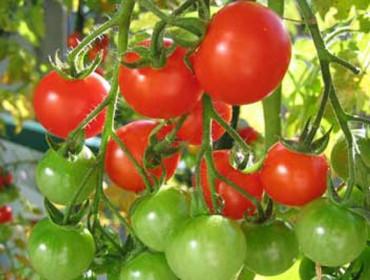 Advirten contra as patentes de plantas naUE