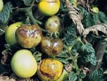 Xornada sobre identificación e control de pragas na horta