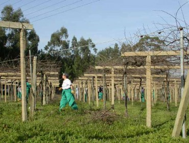 O viño galego, un sector en auxe pero que precisa xente nova e viñedos máis grandes