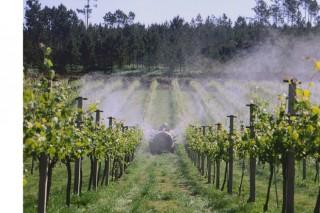 Detectan altos niveles de cobre en los suelos de los viñedos del Noroeste de la Península