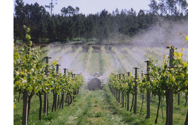 Recomendacións para aplicar menos fitosanitarios sendo igual de efectivos