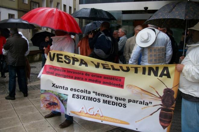 A Asociación Galega de Apicultura destinará 52.000 euros a combater a Vespa Velutina