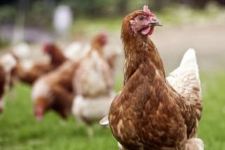 """""""A bioseguridade e a calidade da auga serán claves para que os gandeiros produzan sen antibióticos"""""""