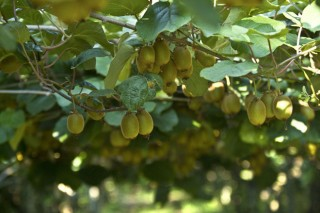 Cursos de fruticultura y viticultura organizados por la Fundación Juana de Vega