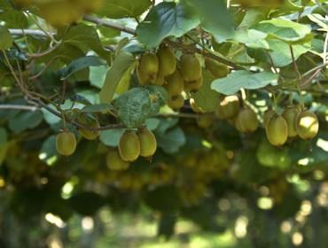 Cursos de froiticultura e viticultura organizados pola Fundación Juana de Vega