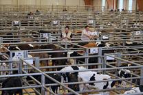 Cotizaciones de vacuno de la Central Agropecuaria del 17 de febrero