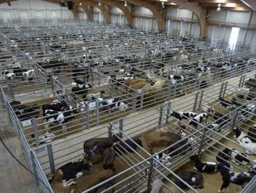 Suba do gando vacún en Silleda, agás os becerros de recría de Frisón