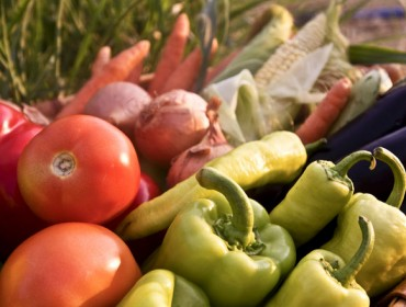 Consellos para o cultivo da horta en xuño