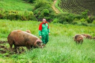 Aldea de Barrio: porcos modernos criados como antes