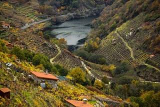 Xornadas de portas abertas nas rutas do Viño de Valdeorras, Monterrei e Ribeira Sacra