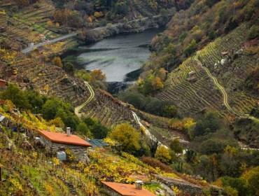 A Ribeira Sacra exalta este fin de semana o viño de Amandi