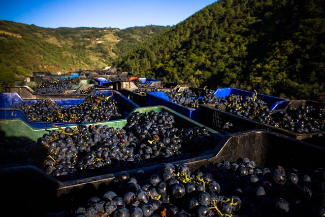 Unha tese prevé que as zonas altas serán as máis aptas para o cultivo do viño na Ribeira Sacra