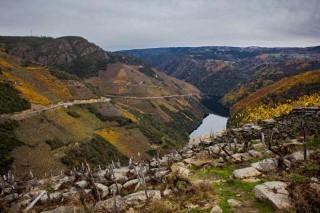 Xornadas Ribeira Sacra sobre conservación do solo e construción da paisaxe