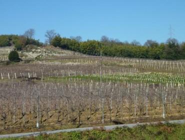 Curso de viticultura regenerativa en Ribadavia