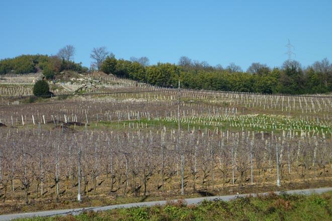 Curso de viticultura rexenerativa en Ribadavia