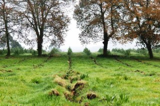 Plantacións forestais en terras agrarias: situación actual e propostas