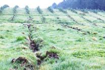 A forestación de terras agrarias a penas mellora o solo