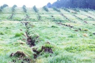 Piden solucións á forestación ilegal de terras agrarias