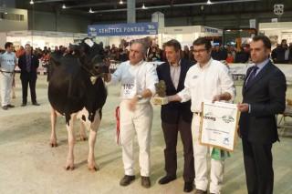 Os asturianos de Badiola Holstein trunfan en GandAgro 2015