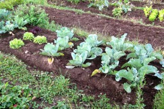 Recomendacións para o coidado da horta en setembro