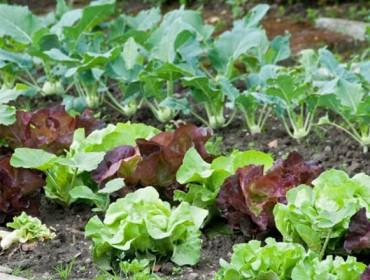 O Goberno autoriza e amplía os desprazamentos para coidar hortas ou animais para autoconsumo