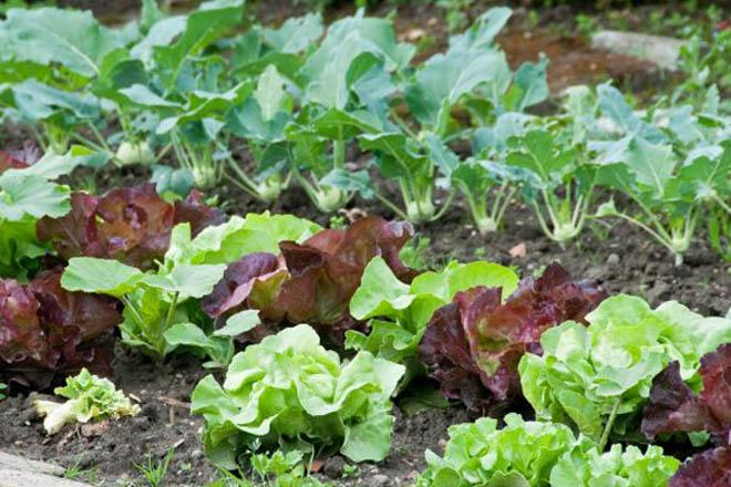 Recomendacións para o cultivo da horta en marzo