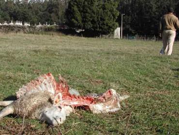 Unións solicita a la Xunta un compromiso serio para el pago de los daños de la fauna salvaje
