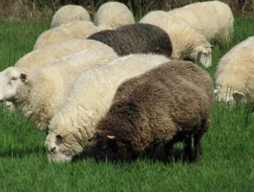 Cuso na Pobra do Caramiñal sobre iniciación e mellora da gandaría de ovino e caprino