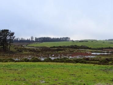 Charla en Lalín este mércores sobre pastoreo en montes comunais