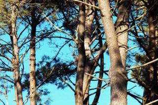 Axudas á primeira forestación de terras non agrícolas