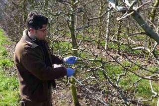 Consellos para a poda das maceiras