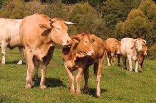 Convocadas as axudas aos produtores que se incorporen a un réxime de calidade