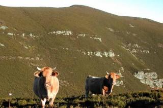A Carqueixa impulsa a comercialización de carne desde o gandeiro ó consumidor