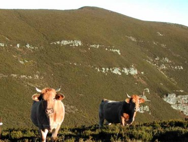As vacas e os cabalos contribúen a ter un monte con vexetación máis diversa