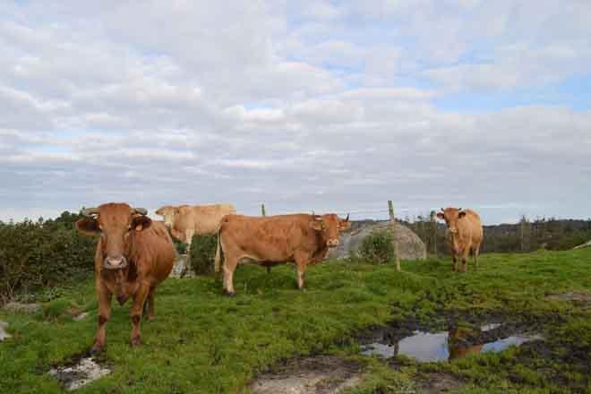 Xunta abona a los ganaderos 161 millones por ayudas de la PAC de 2014