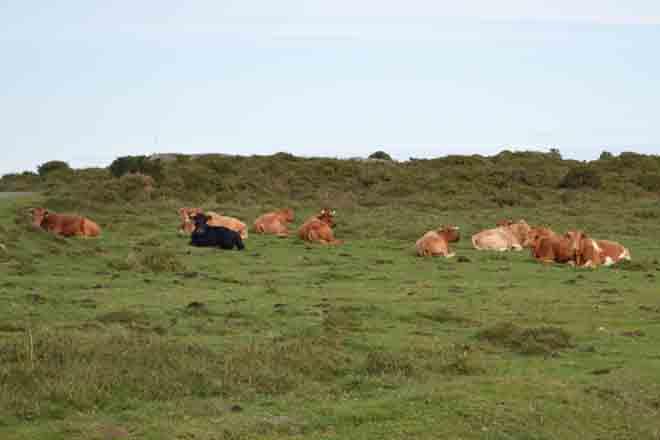 Los usos ganaderos del monte, con problemas en las ayudas de la PAC