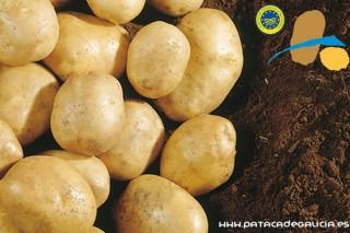 Solicitan incluír as variedades Agraria e Fina de Carballo na IXP Pataca de Galicia e ampliar a área a toda a Comunidade