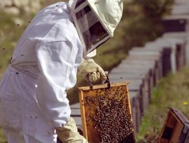 Se prevé que la cosecha de miel descienda este año hasta un 50%