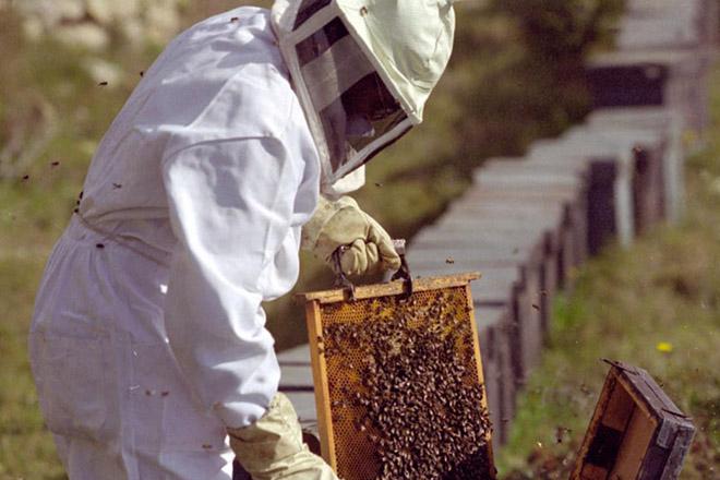 Viaje de ganaderos y apicultores del Courel al parque natural de Somiedo, en Asturias