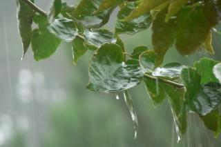 Aemet prevé unha primavera con menos precipitacións