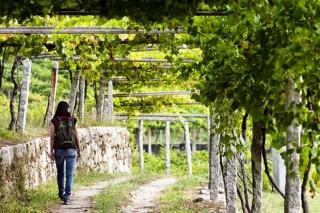 Xornada en Rías Baixas sobre a mellora da xestión de efluentes vitivinícolas