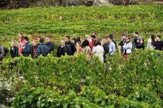 Fin de semana de Puertas Abiertas en las bodegas del Ribeiro y Rías Baixas