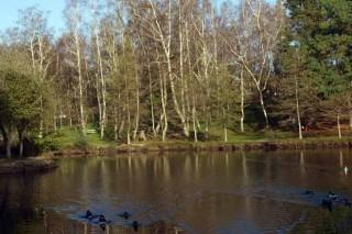 Catro comunidades de montes únense para impulsar un xardín botánico