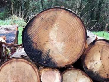 """Curso de """"Implantación da Certificación Forestal PEFC e procesos de auditorías en monte e industria"""""""