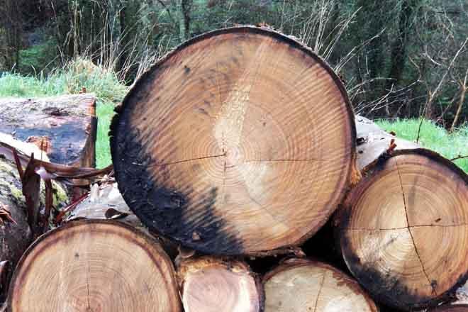 madeira apilada estandar