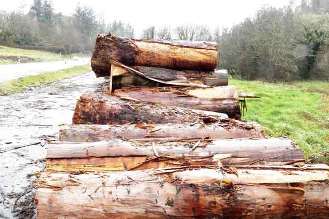Ence primará a compra de madeira en couto redondo